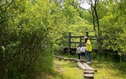 길동생태공원에서 습지생물 관찰하는 가족들