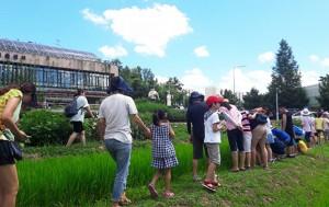 서울시농업기술센터 '여름철 어린이자연학교'