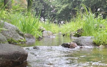 남산야외식물원에 흐르는 실개천