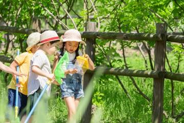 흥미진진 여름방학! 가까운 공원서 탐사, 체험 즐겨요