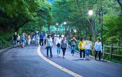 '남산 둘레길 야간산행' 프로그램을 신청하여 산행리더와 야간산행을 하는 시민들