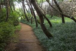 맥문동과 어우러진 소나무 숲에서는 청량감이 최고조였다.