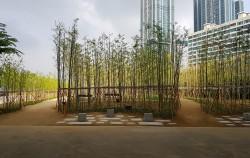 이촌한강공원에 조성된 대나무숲