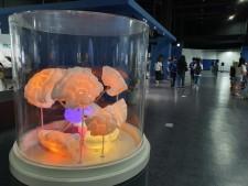 다양한 체험, 전시가 가득한 서울시립과학관