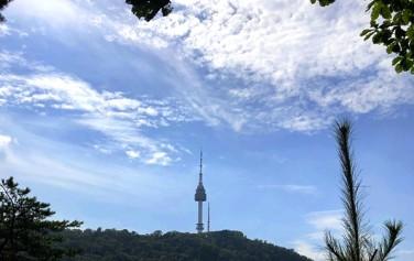 남산 소나무 힐링 숲에서 바라본 남산 타워