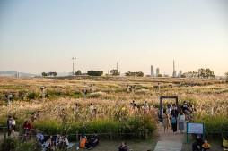 하늘공원 억새축제