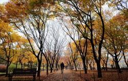 서울시는 10월 25일부터 11월 7일까지 서울시청 1층 로비에서 '2019 공원사진사 합동 사진전'를 개최한다.