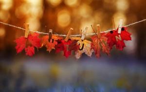 11월 2일 서울혁신파크에서 가을을 맞아 다양한 행사가 열린다.