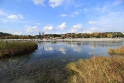 평화의정원 수변에서 바라본 난지연못과 주변의 아름다운 풍경