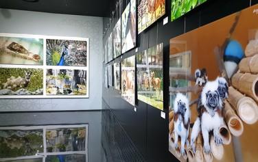시민청에서 열리고 있는 서울동물원 사진전 '우리들의 시간'