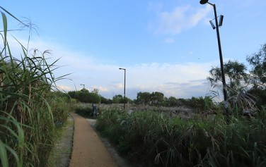난지생태습지원 야생생물 보호구역을 탐방할 수 있는 원형 덱(Ring-work)에서 바라보는 주변 풍광이 아름답다