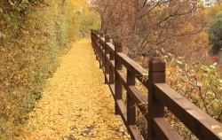 다목적 생태공원 대치유수지체육공원의 수려한 전경