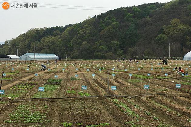 함께서울 친환경농장'은 남양주, 양평, 광주, 고양시, 광명시 등 서울 근교 15곳에서 운영된다