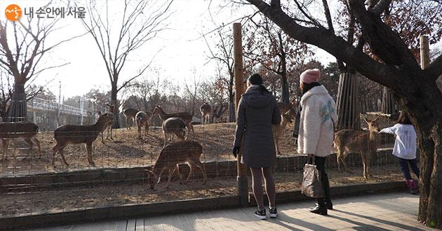 시민들의 사랑을 받고 있는 서울숲 사슴방사장 앞