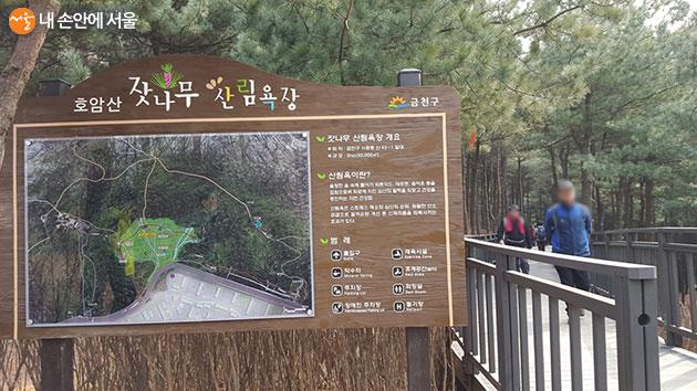 서울둘레길 5-2코스에 있는 호암산 잣나무산림욕장, 시민들의 인기 쉼터이다