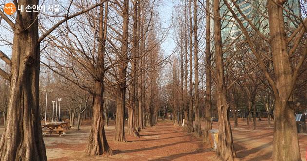 겨울 숲의 정취를 제대로 즐길 수 있는 서울숲
