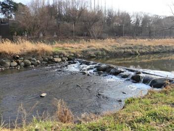 봄과 건강이 흐르는 양재천 물길