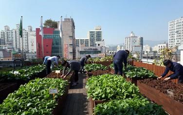 서울시는 시내 곳곳에 총 264개소 5만2,989㎡ 규모의 도시텃밭을 조성한다