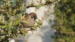 서울로7017의 꽃나무에 내려앉아 먹이를 먹고 있는 참새
