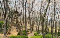 아차산 유아숲 체험장