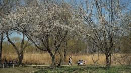 강서습지생태공원
