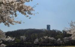 북서울 꿈의숲 전망대에서는 사회적 거리 두기를 하면서 벚꽃을 감상할 수 있다