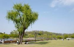 푸른수목원은 서울시 최초의 수목원으로 시민들에게 도심 속 자연 풍경을 제공하고 있다.