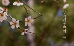 보라매 공원의 꽃 영상을 보며 랜선 나들이를 떠난다