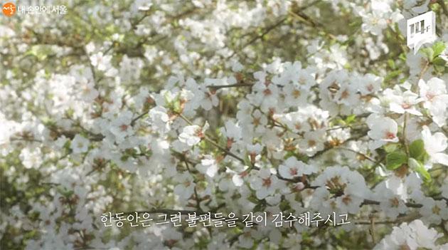 서울식물원에서 만날 수 있는 꽃
