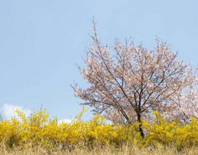 마음 속에 담는 서울의 봄