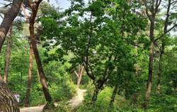 강릉 숲길