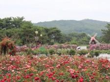 서울대공원 장미원 전경