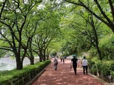 석촌호수를 끼고 조성된 송파나루공원을 시민들이 걷고 있다 Ⓒ 박세호