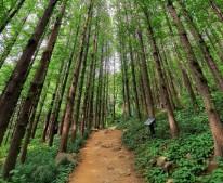 서울관광재단에서는 등산 초보인 '산린이'들도 쉽게 오를 수 있는 서울시 뒷동산 4곳을 추천했다