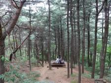 자연을 있는 그대로 느낄 수 있는 초안산 잣나무 숲
