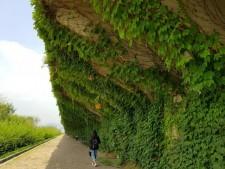 강변북로 도로 아래는 숲속처럼 초록빛이 가득하다.ⓒ김명옥