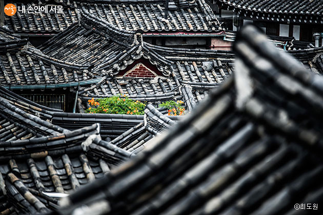 최우수상 / 수줍은 꽃(최도원) / 북촌 한옥밀집지역