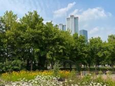 서울숲에서 바라본 푸른 하늘과 울창한 나무