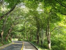 남산을 오르는 길은 조용하고 한적하며 행복한 길이다