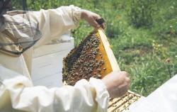 서울시는 '꿀벌의 꿀잼생활' 등 추석연휴동안 즐길 수 있는 온라인 콘텐츠를 제공한다