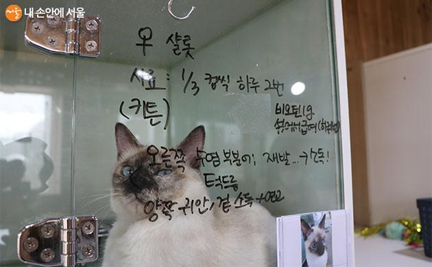 현재 일반 가정에 입양되어 제 2의 묘생을 찾은 고양이 '샬럿'
