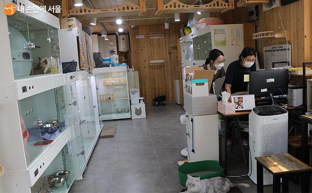 까페에는 봉사자들이 교대 근무하며 고양이의 건강과 위생관리를 하고 있다.