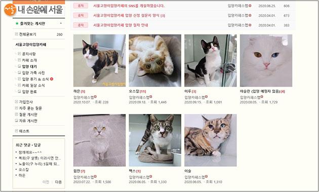 서울고양이입양까페에서 현재 입양 대기 중인 고양이들