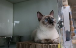 서울고양이입양까페에서 입양을 기다리는 고양이