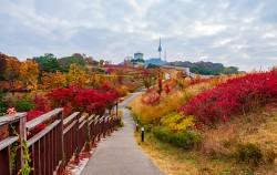 서울시는 11월 14일~15일 '2020 서울 걷자 페스티벌' 행사를 진행한다.