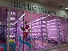 5개 역사에 설치된 메트로팜이 시민들의 사랑을 받고 있다.