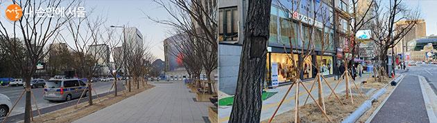 느티나무, 배롱나무 등을 식재한 시청역 주변 보행길