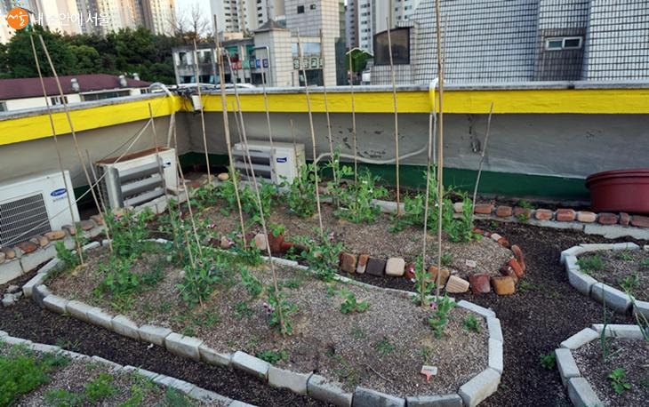 도시농부 영향으로 도심 여러 공간에서 초록을 더해준다