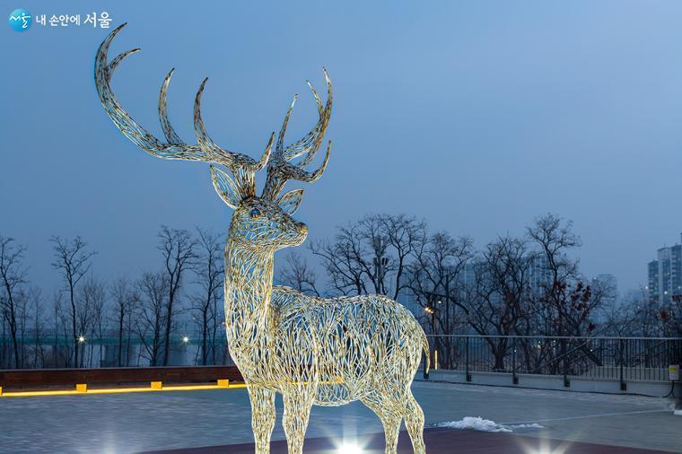 은은한 빛을 품은 사슴뿔이 유난히 멋지다 ⓒ문청야