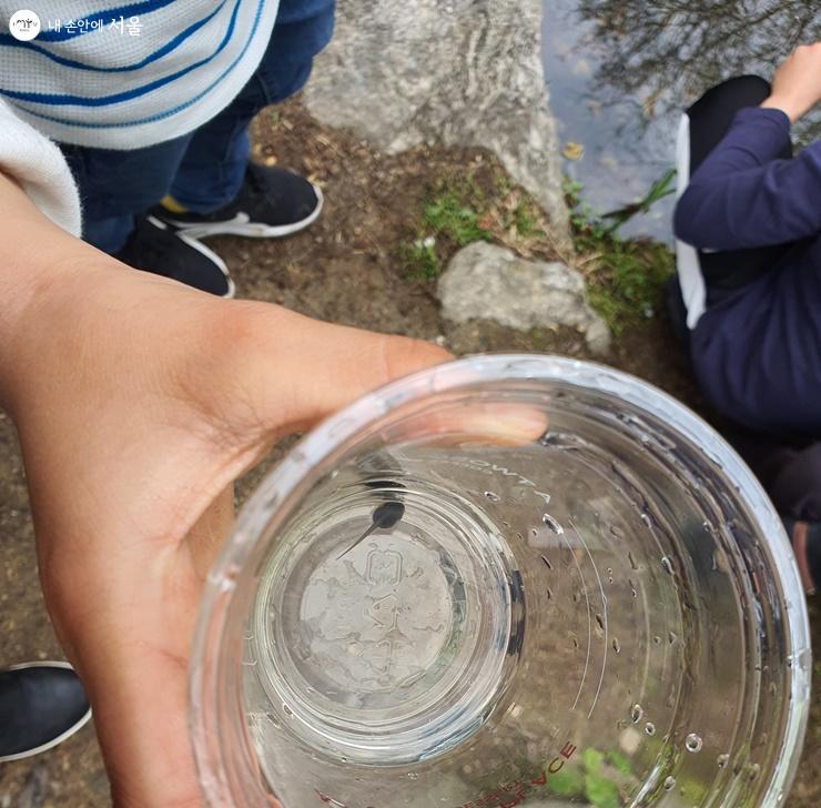 물에서 잡은 올챙이를 보여주는 아이들